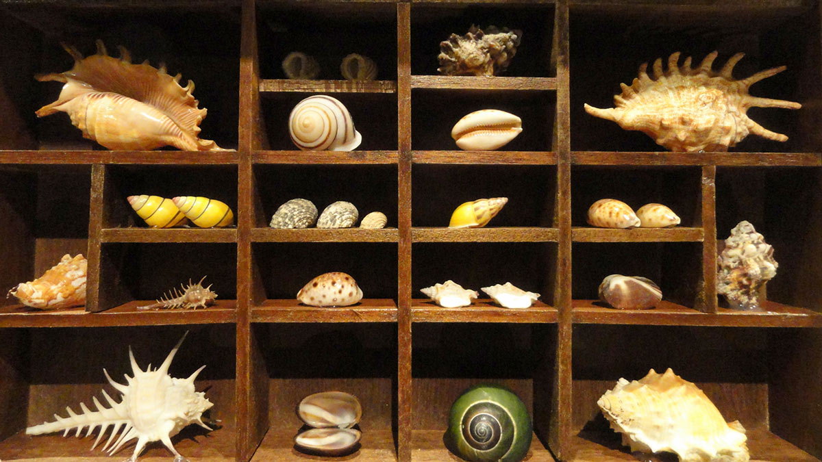Shells in exhibit at National Geographic Museum. Wikimedia Commons.