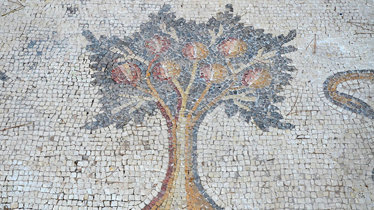 A pomegranate tree, detail from the 6th century AD Bird Mosaic. Image courtesy Wikimedia Commons.