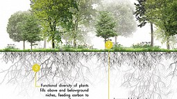 graphic of carbon sequestration project in forest