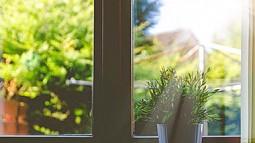 plant in window sill