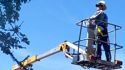 Susan Dolan in a high lift trimming apple trees