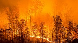 wildfire blazing